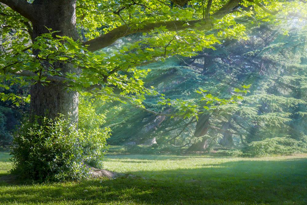 Лес и лучики солнца