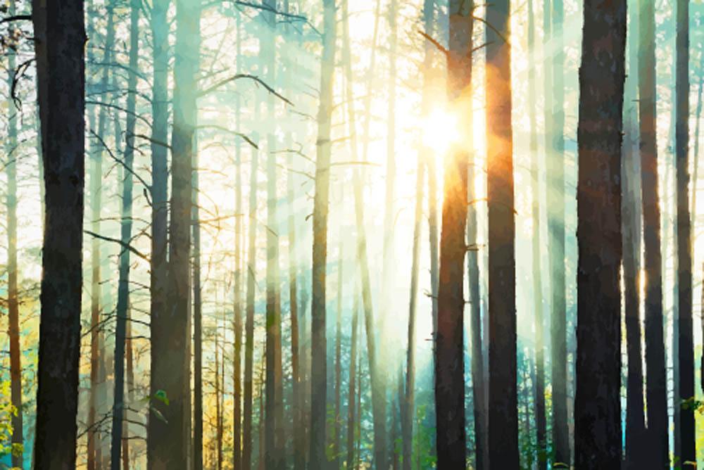 Лучи солнце сквозь деревьев