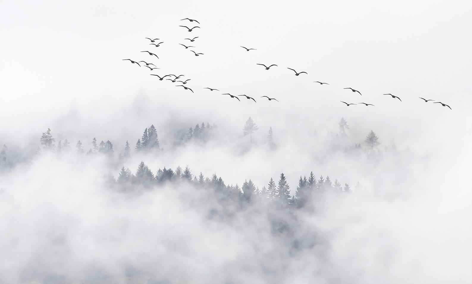 Облака и птицы