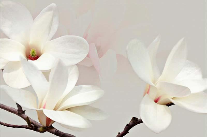 Ветки цветов