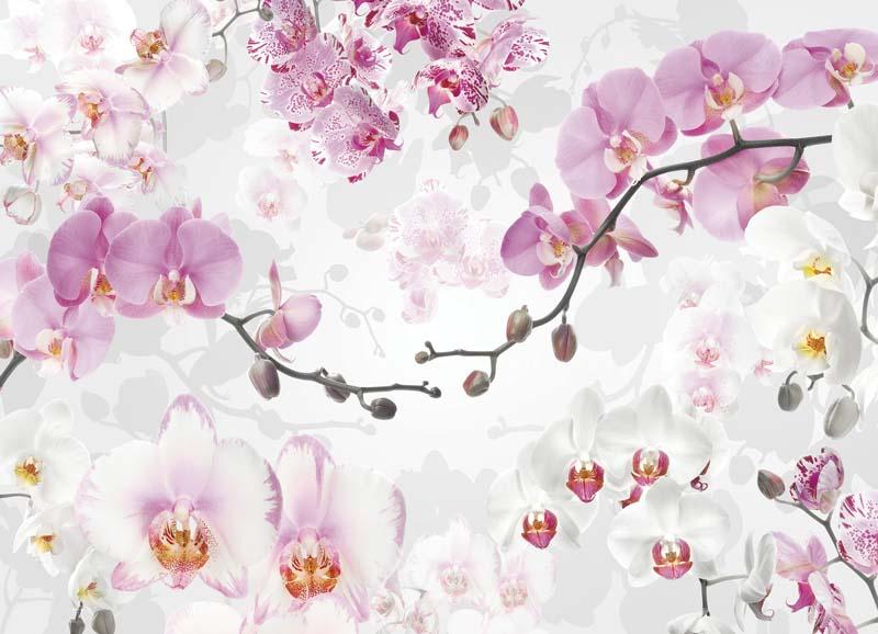 3Д Орхидеи