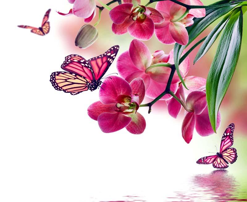Бабочка в орхидеях