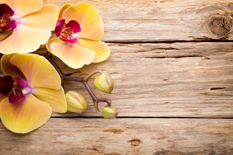 Орхидеи на деревянной доске