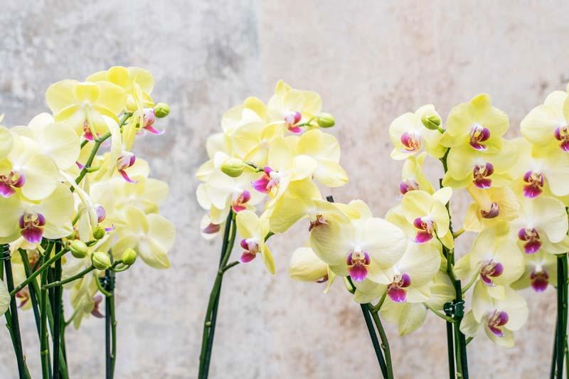 Орхидеи на бетонной стене