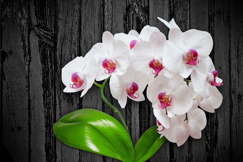 Орхидеи на темном фоне