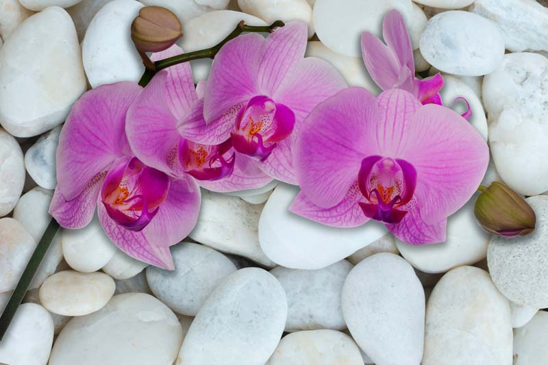 Орхидеи на камнях