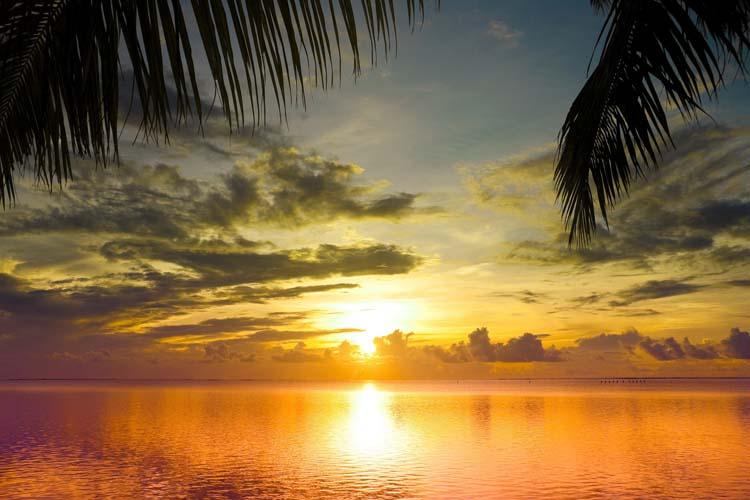 Море и пальмовые листья