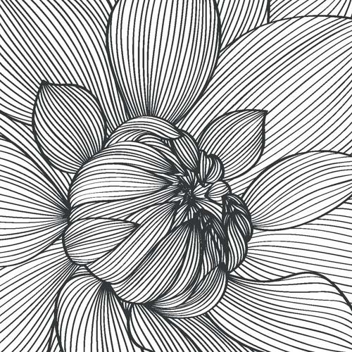 Черно-белый пионы