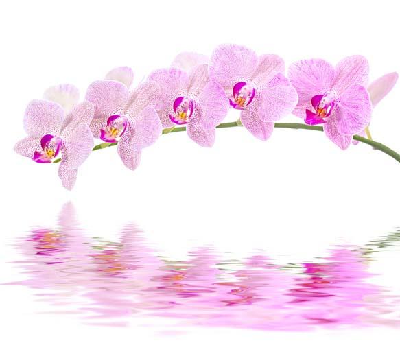 Ветка орхидеи над водой