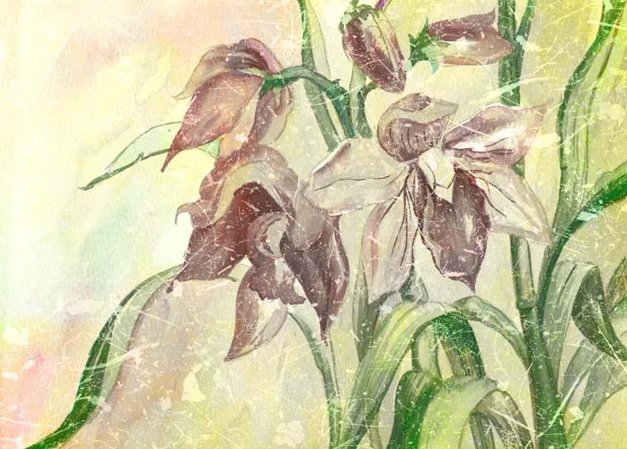 Винтажные лилии