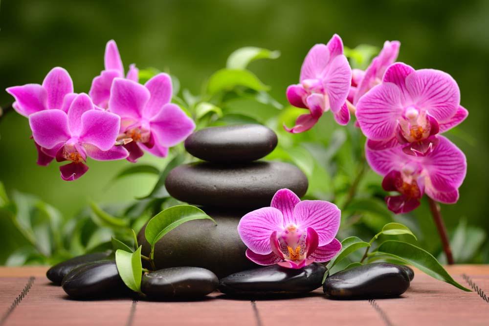 Мелкие орхидеи