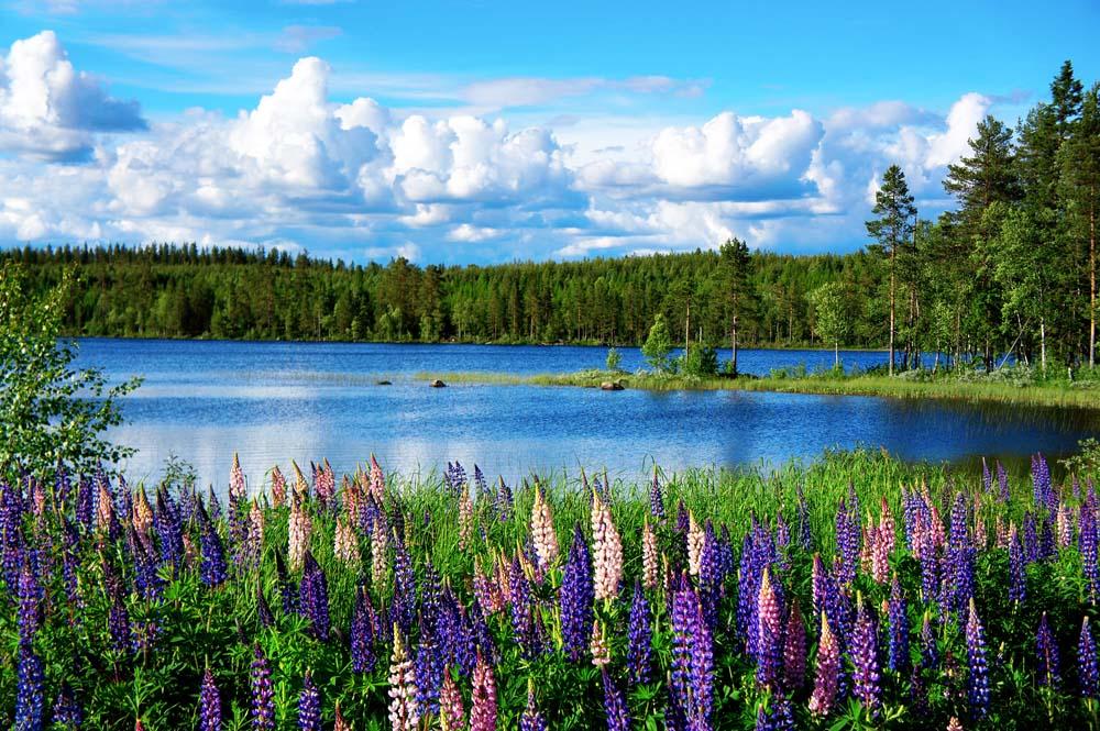 Поле цветов у ручья