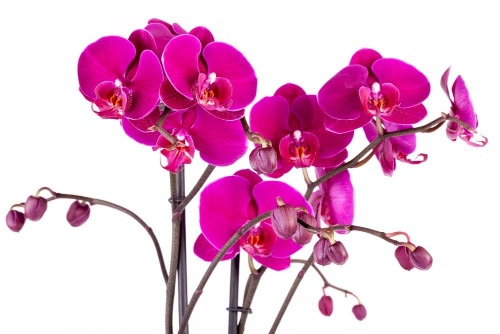 Яркие орхидеи