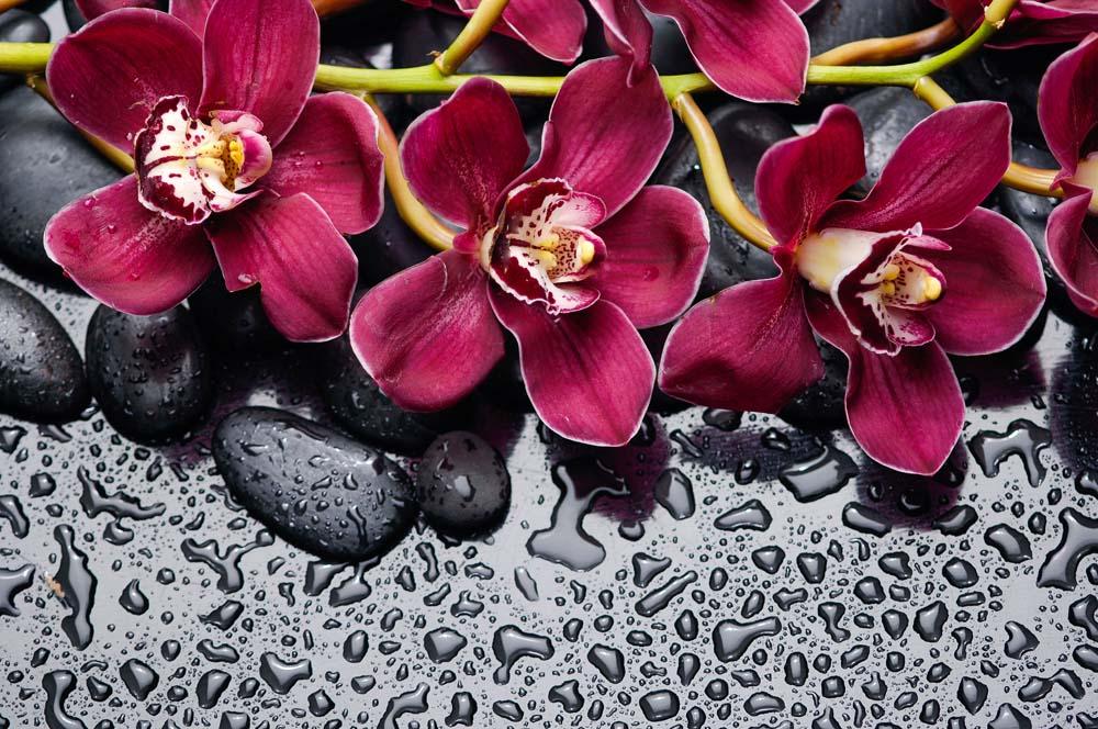 Яркие орхидеи на воде