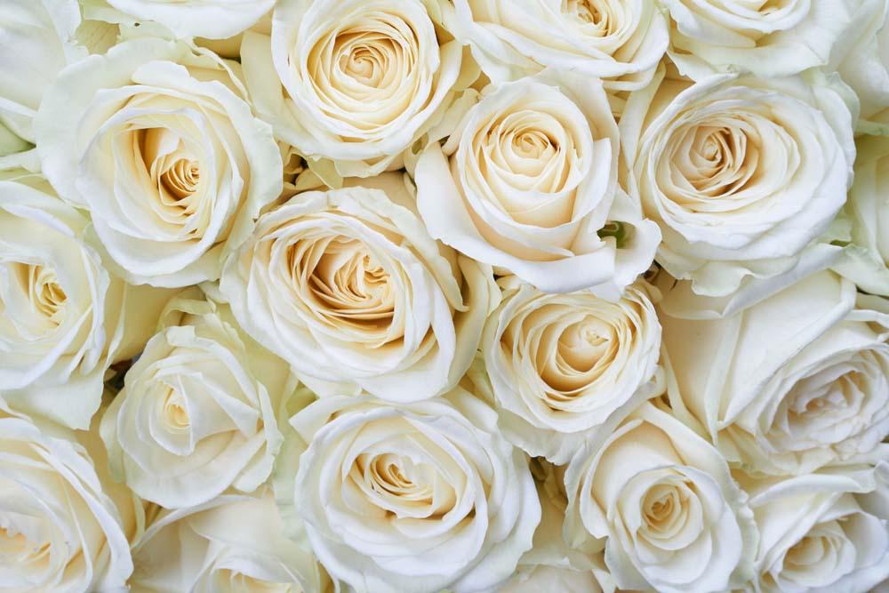 Розы цвета шампанского