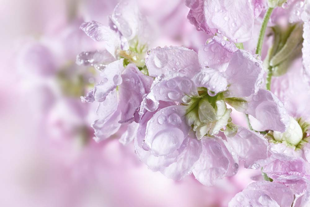 Цветы с капельками воды