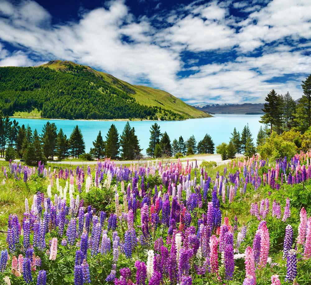 Цветы на горном поле