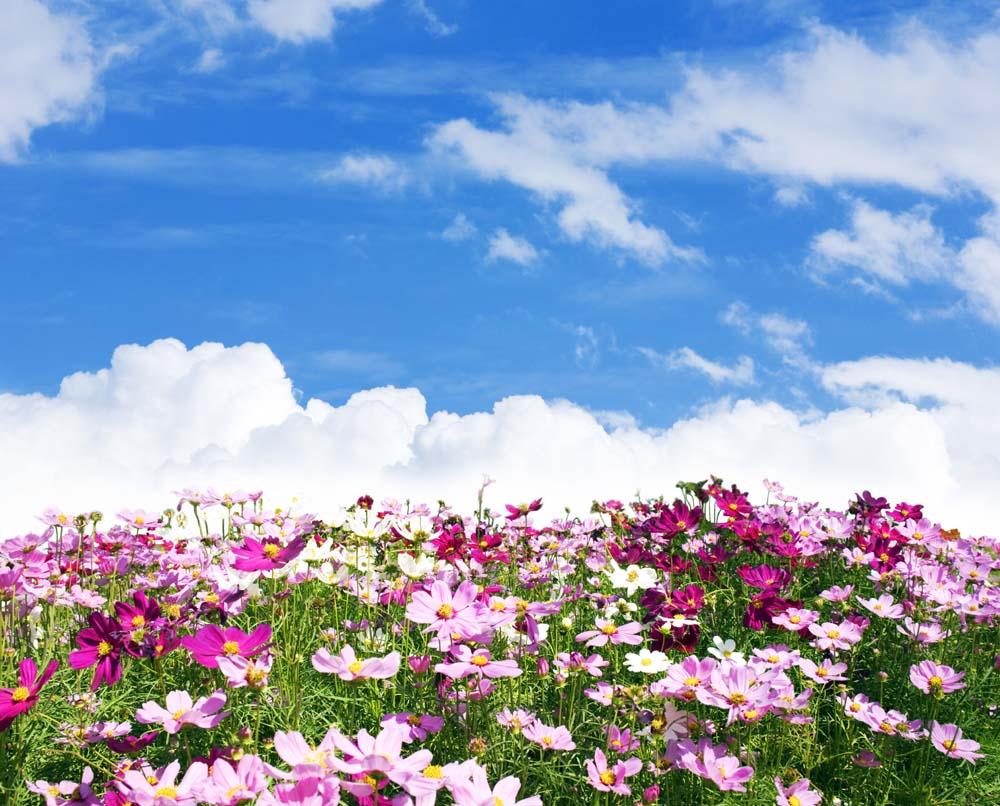 Поле цветов в горах