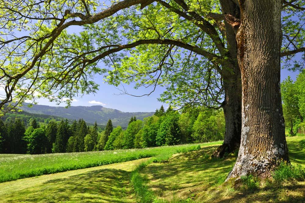 Полянка с деревьями