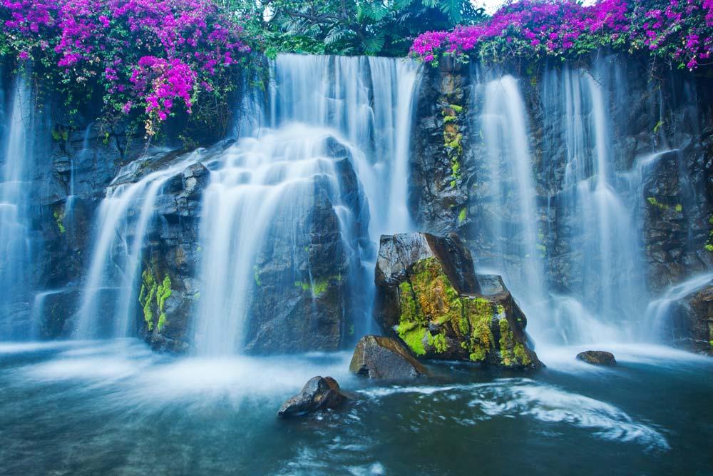 Водопад с цветами