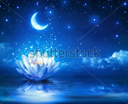 Кувшинка и луна