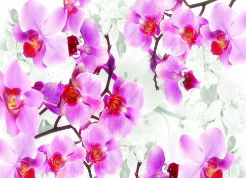 Розовые орхидеи 360х260 Сатин