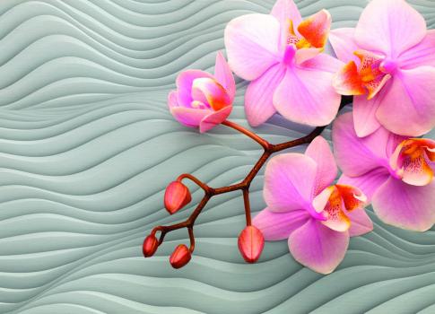 3D орхидеи 360x260 Сатин