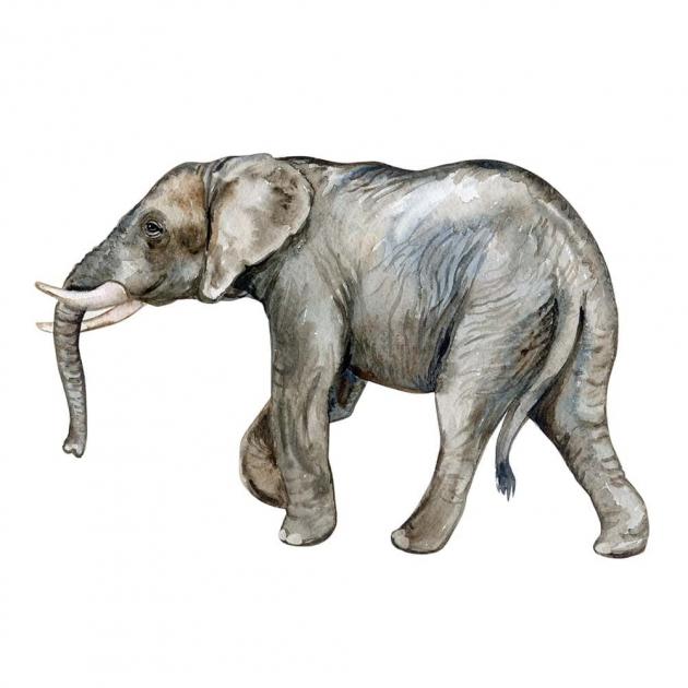 Слон на белом фоне