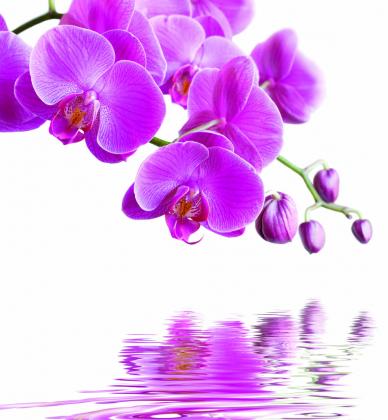 3D орхидеи 240х260 Глянец