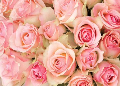 Персиковые розы 360х260 Сатин