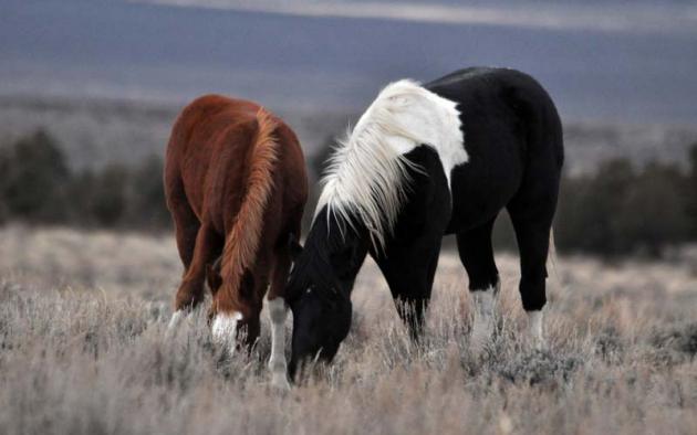 Лошади в поле