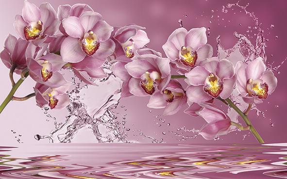 Орхидеи над водой
