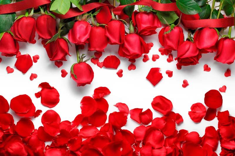 Лепестки красных роз