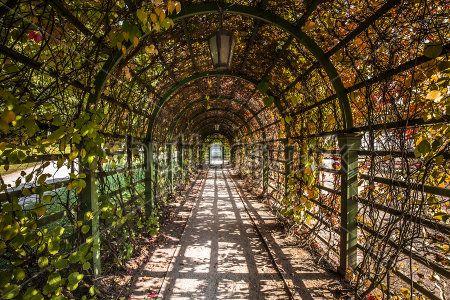 Туннель из плюща
