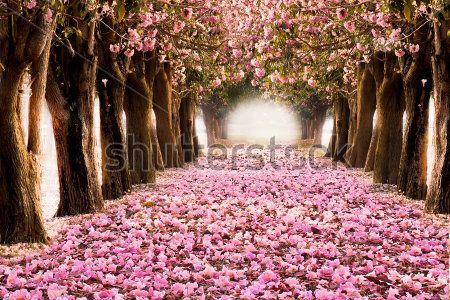 Арка из цветущих деревьев